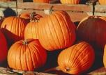 800px-Pumpkins
