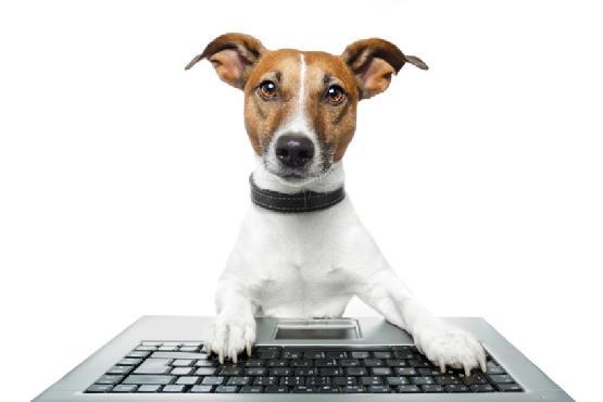stress-pets-work