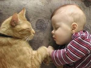 pet infant